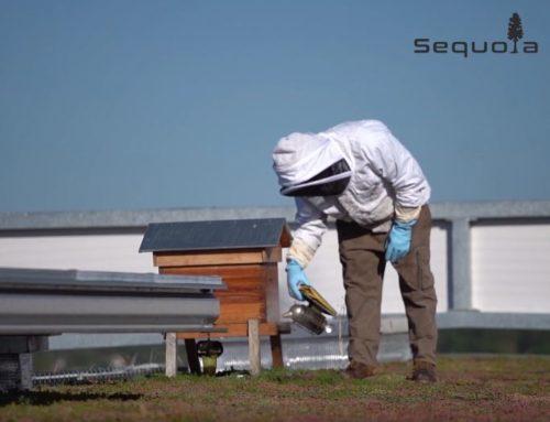Vidéo de la récolte de Miel sur une toiture végétalisée VERTIGE