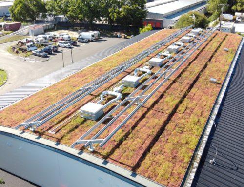 Prix toiture végétalisée, coût moyen & budget d'installation