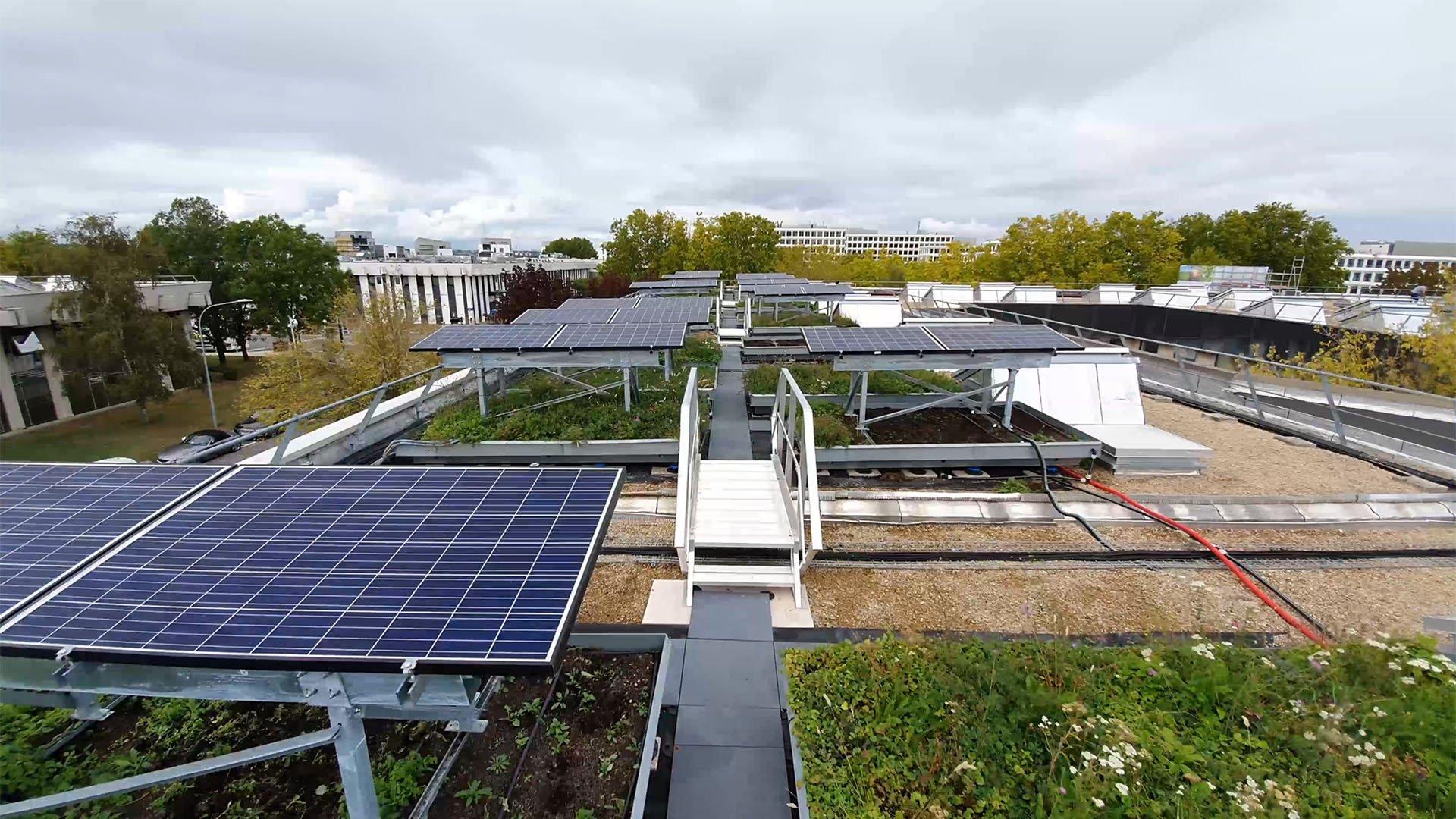 META DESCRIPTION Premier compte-rendu de notre projet d'expérimentation de toiture végétalisée couplée à des panneaux photovoltaïques, à Rungis.