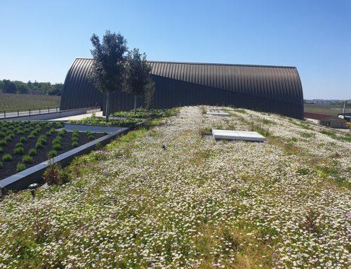Avantages d'une toiture végétalisée
