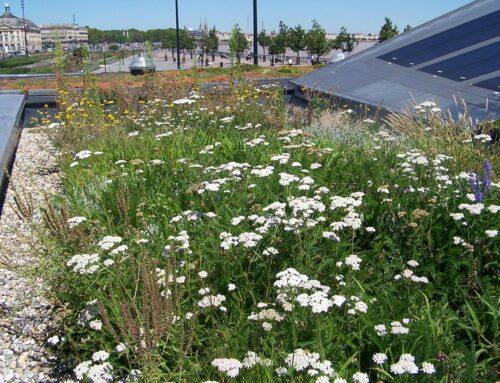 Projet loi climat : des toitures végétalisées pour contrer le changement climatique