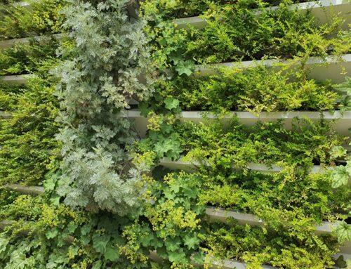 Quels sont les avantages d'un mur végétalisé ?